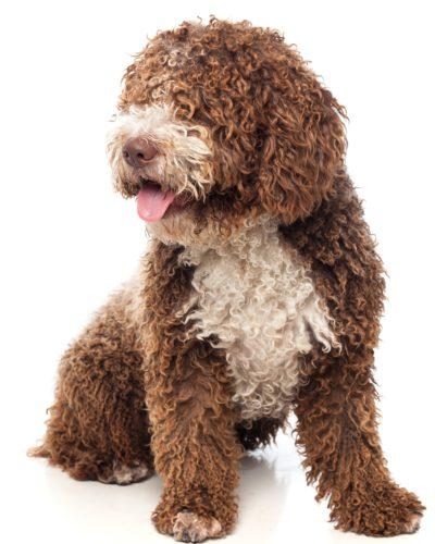 http://www.fisioterapia-veterinaria.it/wp-content/uploads/2019/11/1-copia-400x500.jpg